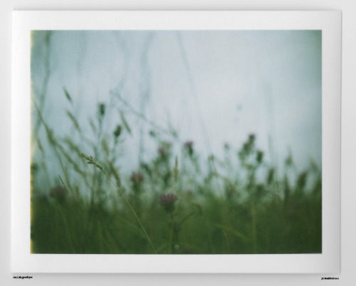 Day 203.  North Cornwall, UK.   Polaroid Land Camera 240 and 125i film (expired 12/2007).   Polaroid photograph, all rights reserved, copyright: Jo Bradford 2010