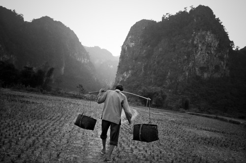 24 November 2004 | An elderly man carries goods from the market along a bamboo pole to his village in northern Vietnam.  The was the very last image I made while on a day assignment with GTZ, a German development agency working on sustainable development projects in Vietnam (this project was about access to clean water). I felt this made a very simple but effective closing shot from the series I made that day. Often its the simple ones - where you're not doing the splits to get an original angle at f1.4 - that work best.
