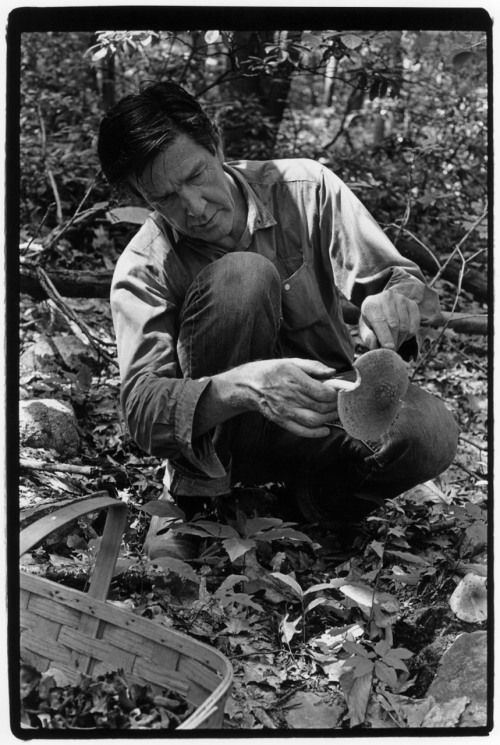 anticipatedstranger:  John Cage picking mushrooms by William Gedney