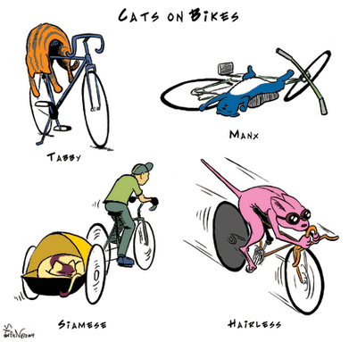 Cats on Bikes, Part 2