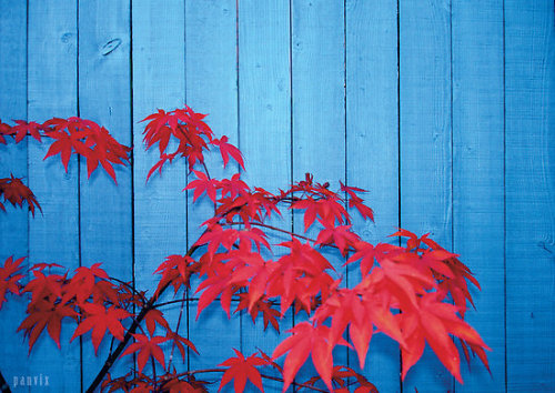 "heartbeatoz:  ""Red Leaves"" Fine Art Print by Panvix [5961364-1] - RedBubble"