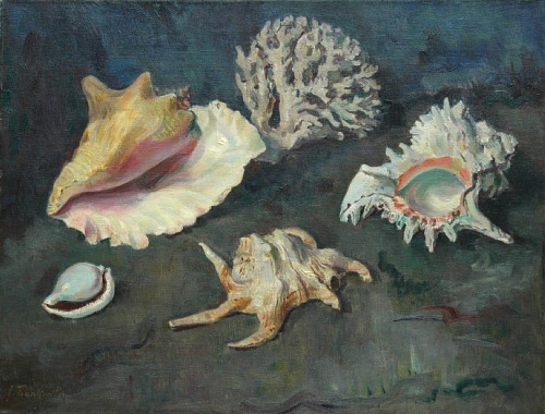 Joannes Franken Shells and Coral 1957