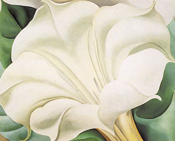 Georgia O'Keeffe, The White Flower (White Trumpet Flower).