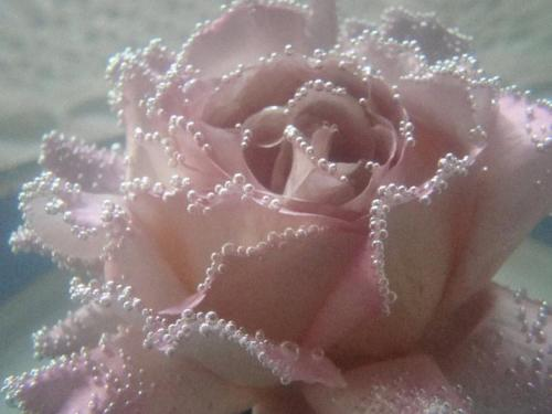 rose-wing:  pale and pretty ♡
