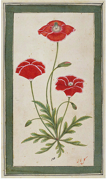Unknown (India) A Poppy Plant 18th century