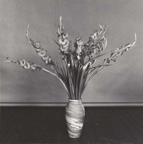 Robert Mapplethorpe Gladioli 1979