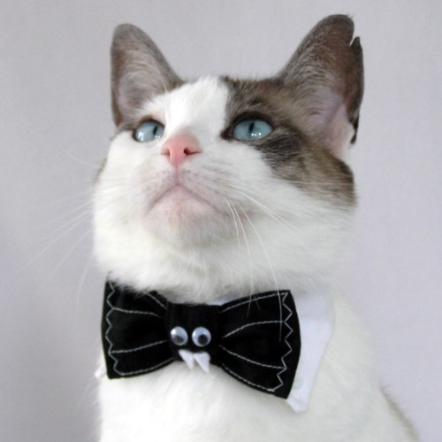 Must have! My cat used to have a bow tie! I think he misses feeling fancy. etsycute:  Batty Bat - Made-to-Order Pet Bow Tie  [via whiskerkisses@etsy]
