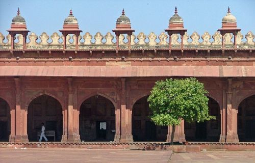 A tree grows in the 16th century ghost town of Fatehpur Sikri, Uttar Pradesh, India.  Visit eozberk for more cool photography