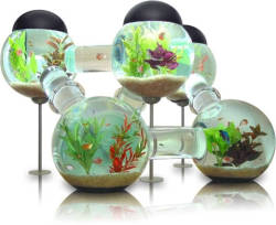 i wanna get this for some fishes!!