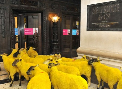 There are a bunch of brightly dyed sheep wandering around London to celebrate Wool Week. I would love to see them. And pet them. Aaaaaand coordinate outfits with them.