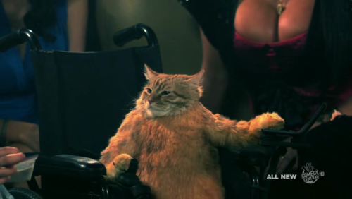 Wheelchair Cat: Trust Fund Kitty.