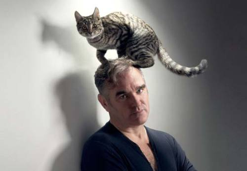yourcatwasdelicious:  morrissey  Morrissey does seem the equivalent to a crazy cat lady…but british…and a silver fox