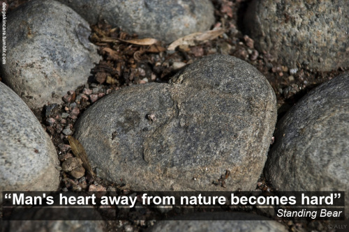 """Man's heart away from nature becomes hard."" Standing Bear  photo by starlighthope"