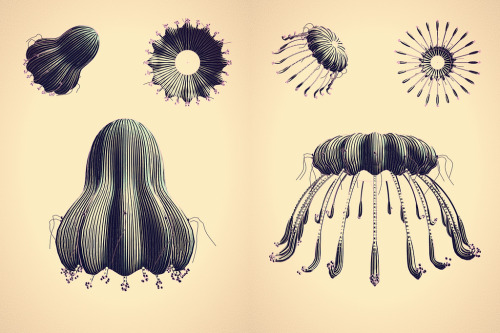Cindermedusae Artist and programmer Marcin Ignac created these Haeckel-inspired randomly generated algorithmic creatures using Cinder—the cross-platform, open-source C++ toolkit created by the brilliant minds at The Barbarian Group.  Cinder was developed for creative coding applications for Windows, Mac and iOS devices, and is being used to generate fictional organisms, provide visuals for Peter Gabriel's latest tour, create the augmented reality for Esquire magazine, and much more. Stay up to date with the Cinder library and see the latest features added in Cinder 0.8.2. Via Rick Web (co-founding Barbarian and active on Tumblr)