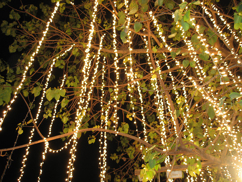Hanging twinkle lights.