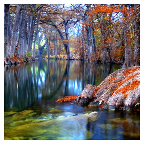 landscapelifescape:  Cyprus Trees, Hunt, Texas, USA