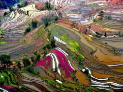 Rice field terraces.  Stunning texture and color….original photograph here.