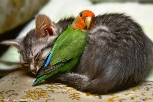 kittenskittenskittens:  Cats and their unusual friendship | Kittens - Cats Pictures, Pet Cat And More I just don't even know what to do with myself right now.  Agreed! awww kitten