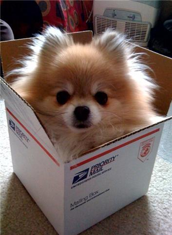 kateatzpirahna:  I want this kind of mail.