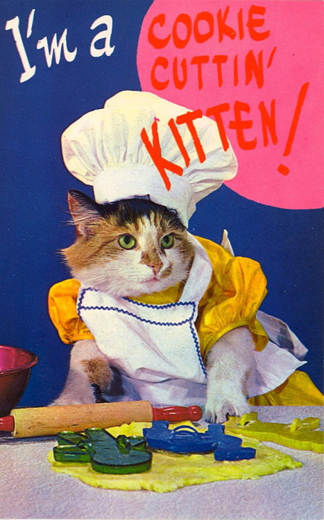 @wafffflesmom, your cats need aprons. lesmadeleine:  bad-postcards: BAD POSTCARDS IS ONE OF THE BEST TUMBLRS EVER I HOPE YOU GUYS ALL FOLLOW THEM.