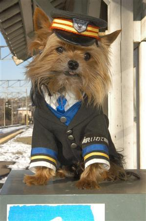 "petswhowanttokillthemselves:  ""The train should be pulling in any minute, folks. If anyone needs me, I'll be sobbing uncontrollably with my head on the tracks."""