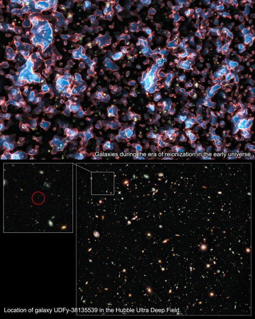 The most distant galaxy ever measured  A European team of astronomers using ESO's Very Large Telescope (VLT) has measured the distance to the most remote galaxy so far, seeing it when the Universe was only about 600 million years old (a redshift of 8.6). The astrophysical implications of this detection is very important, since this is the first time we are looking at one of the galaxies that cleared out the opaque hydrogen fog which had filled the very early Universe.  Studying these first galaxies is extremely difficult. By the time that their initially brilliant light gets to Earth they appear very faint and small. Furthermore, this dim light falls mostly in the infrared part of the spectrum because its wavelength has been stretched by the expansion of the Universe — an effect known as redshift.  To make matters worse, at this early time, less than a billion years after the Big Bang, the Universe was not fully transparent and much of it was filled with a hydrogen fog that absorbed the fierce ultraviolet light from young galaxies (image). The period when the fog was still being cleared by this ultraviolet light is known as the era of reionization.  Despite these challenges the new Wide Field Camera 3 on the Hubble Space Telescope discovered several candidate objects in 2009 that were thought to be galaxies shining in the era of reionization. Confirming the distances to such faint and remote objects is an enormous challenge and can only reliably be done using spectroscopy from very large ground-based telescopes.  Astronomers used the VLT's SINFONI instrument to observe a candidate galaxy called UDFy-38135539 with a long exposure time of 16 hours. After two months of very careful analysis and testing, the team found that they had clearly detected the very faint glow from hydrogen at a redshift of 8.6, which makes this galaxy the most distant object ever confirmed by spectroscopy. A redshift of 8.6 corresponds to a galaxy seen just 600 million years after the Big Bang.  One of the surprising things about this discovery is that the glow from UDFy-38135539 seems not to be strong enough on its own to clear out the hydrogen fog. There must be other galaxies, probably fainter and less massive nearby companions of UDFy-38135539, which also helped make the space around the galaxy transparent. Without this additional help the light from the galaxy, no matter how brilliant, would have been trapped in the surrounding hydrogen fog and we would not have been able to detect it.  Studying the era of reionization and galaxy formation is pushing the capability of current telescopes and instruments to the limit, but this is just the type of science that will be routine when the biggest optical and near infrared telescope in the world — European Extremely Large Telescope — becomes operational.  Image: (Top) A simulation that depicts how galaxies looked like during the era of reionization in the early Universe. [paper]. (Bottom) The infrared Hubble Ultra Deep Field taken by the Hubble Space Telescope in 2009. The galaxy UDFy-38135539 is the faint object shown in the excerpt on the left.  • Source: ESO • See also: Video version of this story