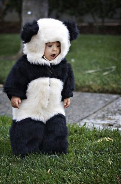 superb panda kid!
