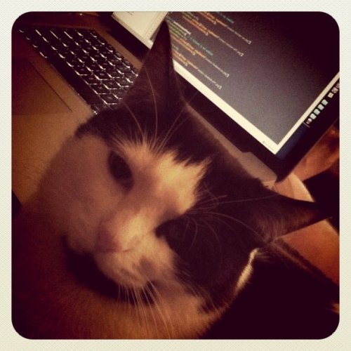 New coding assistant - she is a cocoa expert (Taken with instagram)