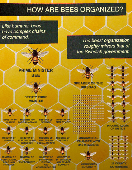 How Are Bees Organized?
