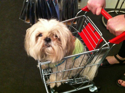 My dog Macy in a tiny shopping cart.  Part of my week of intentional silliness. Last night Macy and I attended the SITE NYC Holiday preview event (that's the awesome store owned by my bestie Mackenzi).  It was rad and I scored a cool glittery clock Christmas ornament to put on my altar as a reminder to treat every moment as sparkly and precious.  I also got some wall clings to acknowledge the four elements, a diamond, octopus, bird and a campfire (earth, water, air, fire).  Kelly Cutrone's book (which I highly recommend) says you should cultivate your own spirituality that reflects your personality.  If my spirituality cannot involve foolishness it's not for me.