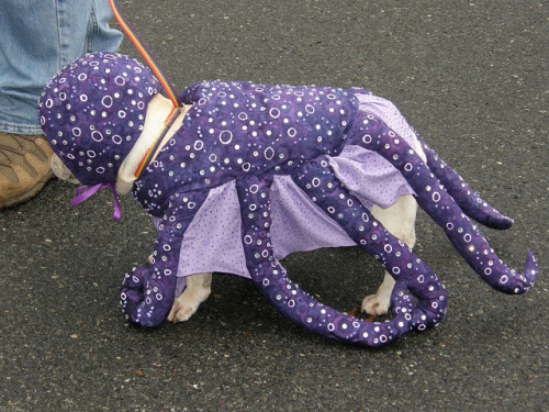 Tanzie the Octopus aka Frenchie (by Diane's Pets)