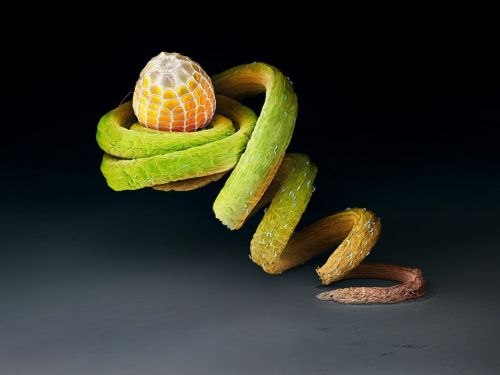 Butterfly Egg  Perched on the tendril of a Passiflora plant, the egg of the  Julia heliconian butterfly may be safe from hungry ants. This species  lays its eggs almost exclusively on this plant's twisted vines. #