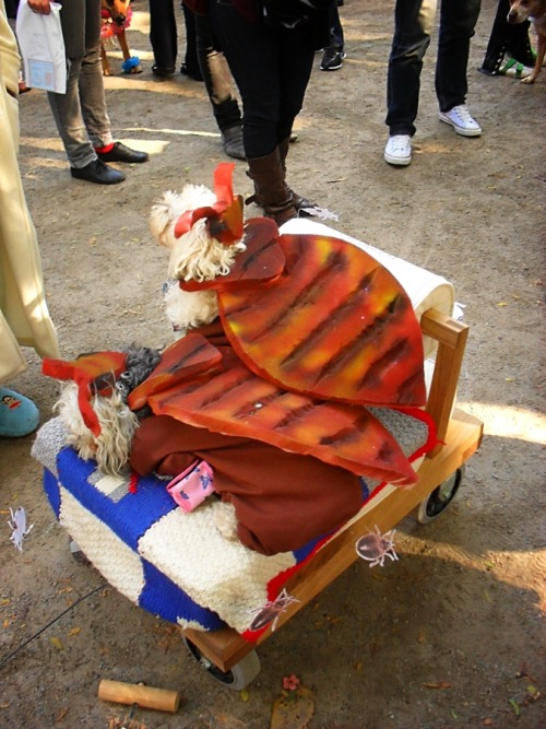 Bedbugs on a bed. Timely and oh so perfect.  Halloween Dog Parade in Tompkins Square Park, Manhattan. The Halloween Dog Parade is the largest event of its kind and happens annually in Tompkins Square Park. This year it happened on October 23rd, 2010.