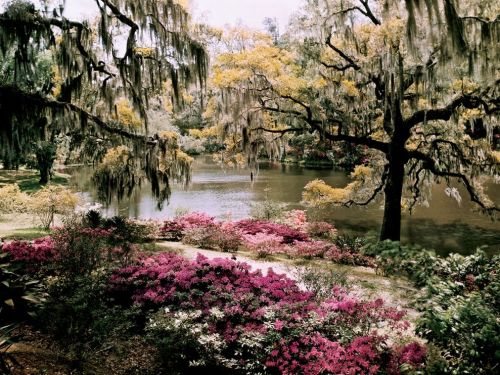 nationalgeographicmagazine:  Middleton Gardens, South Carolina Photograph by B. Anthony Stewart, National GeographicThis exquisite image was photographed long ago, on a glass plate negative, by B. Anthony Stewart. Perhaps that explains the delicate palette that makes this image so very beautiful. The colors in this photograph have captured the feeling of spring in the American Southeast as well as any image I have ever seen. —Annie Griffiths Download Wallpaper (1600 x 1200 pixels)
