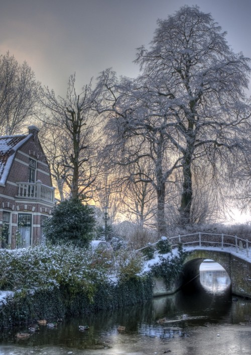 rod42:  Alkmaar, Snowy Dutch view for the Clarissenbuurt by klaash63