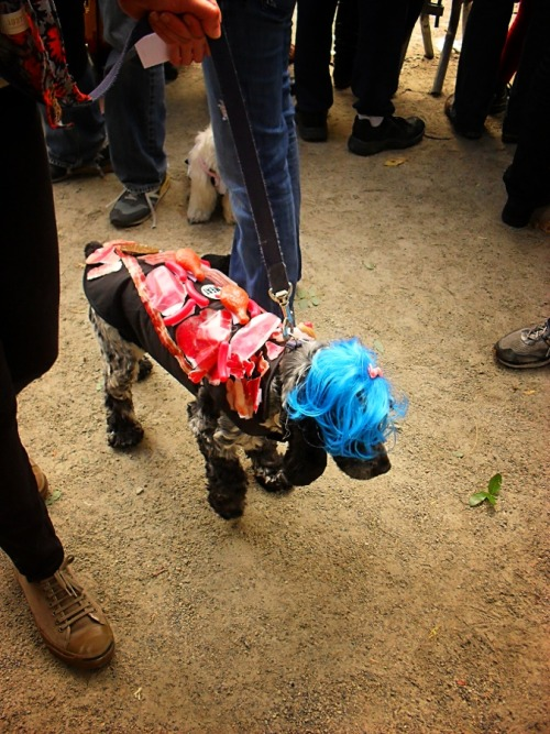 Lady Gaga and her meat dress. :) Halloween Dog Parade in Tompkins Square Park, Manhattan. The Halloween Dog Parade is the largest event of its kind and happens annually in Tompkins Square Park. This year it happened on October 23rd, 2010.