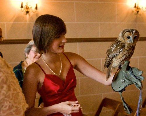 Me and Ted the owl.  Ted the baby owl was the rind bearer at my mother's wedding last summer at Dalhousie castle in Scotland. He flew the rings down to me and I took them and handed them to the priest.