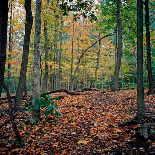 dandellapiazza:  A nice autumn we're having in New Jersey this year.  This particular spot is close to where I grew up, the Watchung Reservation.  Rolleiflex 3.5 E Planar, Kodak Portra 160NC.  Such a nice change of pace to use this camera after going full tilt with the Nikon DSLR's for so much else….