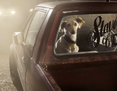 photojojo:   Mute: The Silence of Dogs in Cars is a project by Martin Usborne in which he photographed dogs left to wait in cars by their masters.