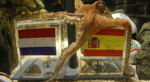 "-ultraviolence:  thedailywhat:  RIP: Paul the Psychic Octopus, whose uncanny ability to correctly predict the outcome of the 2010 FIFA World Cup still baffles psychic animal specialists to this day, passed away last night in his enclosure at the Oberhausen Sea Life Centre in Germany. ""He appears to have passed away peacefully during the night, of natural causes, and we are consoled by the knowledge that he enjoyed a good life here,"" Sea Life Centre manager Stefan Porwoll is quoted as saying. ""We may decide to give Paul his own small burial plot within our grounds and erect a modest permanent shrine."" [telegraph.]  RIP Paul. You were a brilliant octopi.  I legitimately almost cried. Paul was one of the highlights of my summer. Watching Italian TV and not understanding all of it and then suddenly hearing 'il polpo Paul' during the World Cup coverage made my night one day in Rome."