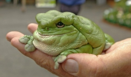 Ugly frog? Or baby Jabba the Hutt?  (via oceanstateofmind:mentalextensions, Star Wars photo via wikia)