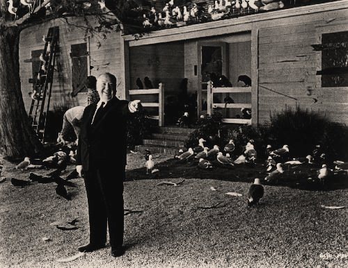 slaughteredlamb:  Alfred Hitchcock The Birds