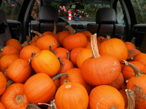 The pumpkins are on the way to Whittier :)