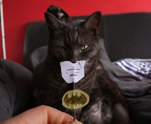 This cat's Batman costume is better than your Halloween costume FunnyorDie