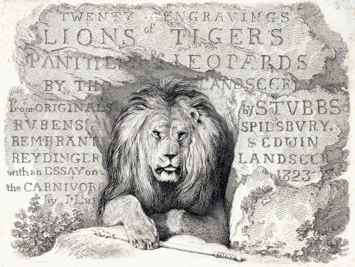 oldbookillustrations:  Edwin Landseer, half-title page from Engravings of lions, tigers, panthers, leopards, dogs, &c., chiefly after the designs of Sir Edwin Landseer, printed from the original plates published between 1823 and 1828, London, 1853.