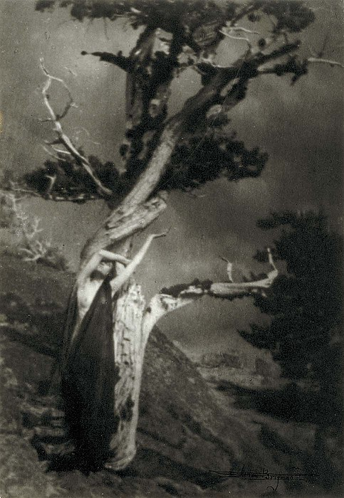 luzfosca:  Anne Brigman - The Dying Cedar, 1906 via