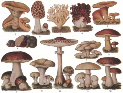 doodledreamer:  why are mushrooms so cool?