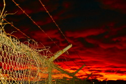 Halloween. Barbed Wire and Violence. Enjoy.