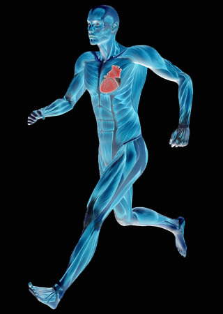 Marathons, Heart Damage, MRIs, and VO2max