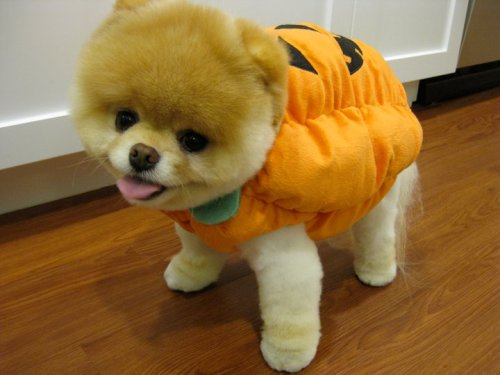 Cutest Halloween Costume Ever!